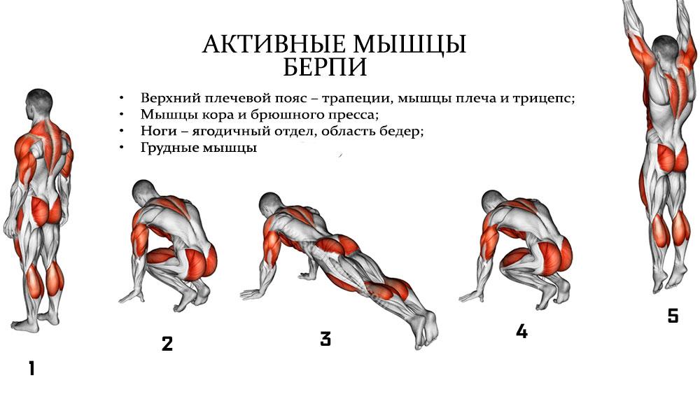 Мышцы задействованные в берпи