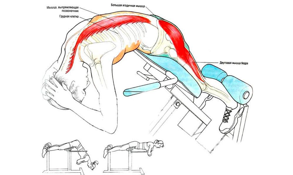 мышцы гиперэкстензии