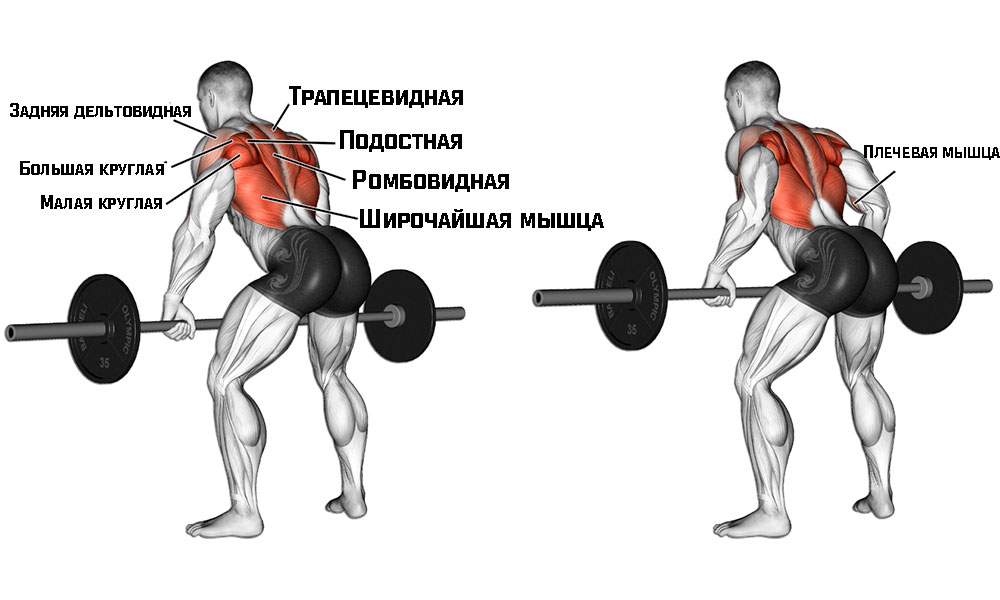 Тяга штанги в наклоне работающие мышцы